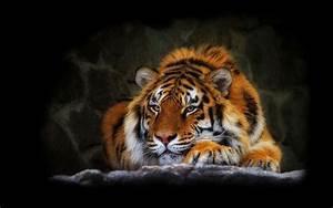 Tiger Desktop Wallpaper HD
