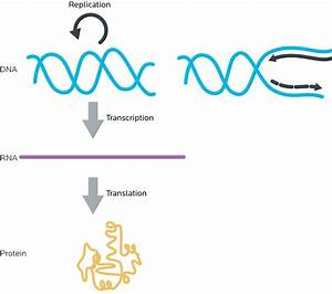 Synthesis Of Rna From The Instructions In Dna Is Called