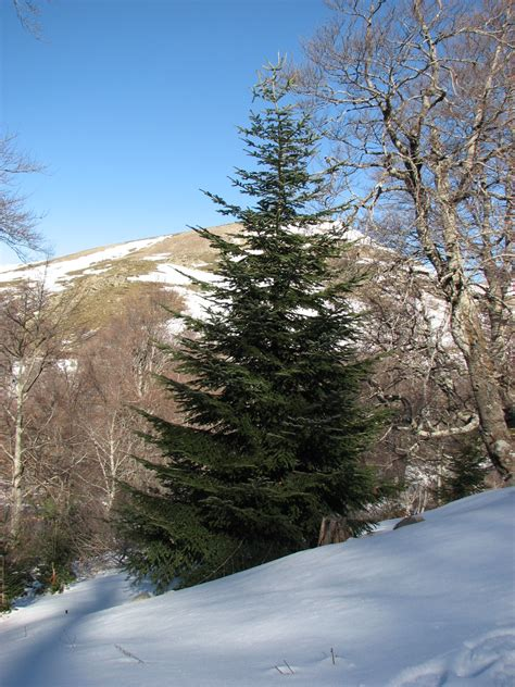 tannenbaum wikipedia