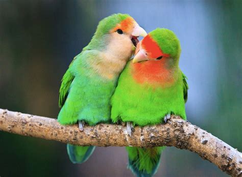 10 Cutest Birds That'll Make Your Day