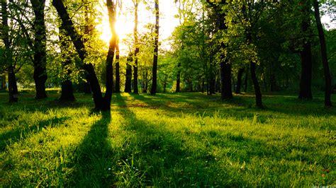 the bureau gameplay sun between trees wallpaper 610704
