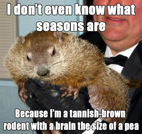 Groundhog Memes - 8 groundhog day memes from punxsutawney phil