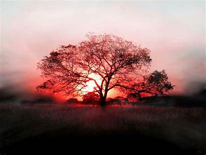 Tree Wallpapers คอม Cool Trees