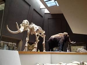 Rosensteinmuseum - Picture Of Stuttgart State Museum Of Natural History