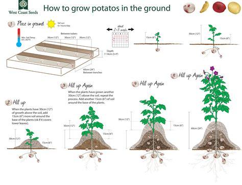 how to grow potatoes how to grow potatoes