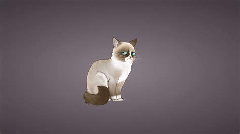 Скачать 1920x1080 Grumpy Cat грампи кэт мем кот обои