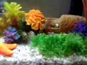 Poisson Aquarium Eau Chaude : mon aquarium poissons d 39 eau chaude youtube ~ Mglfilm.com Idées de Décoration