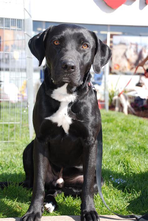 jack black rocket dog rescue