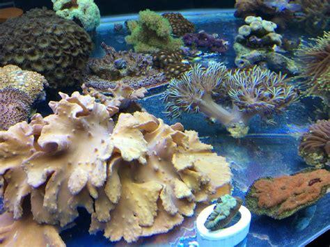 aquarium eau sal 233 e granby jean sur richelieu sherbrooke animalerie safari granby