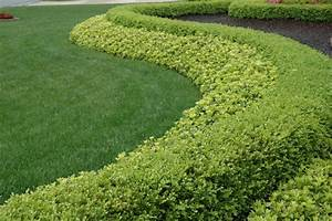 Strong Statement Hedge Row Boxwood And Pachysandra