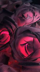 Gothic roses | Wallpapers | Pinterest