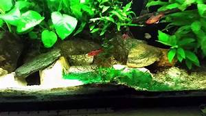 Removing Blue Green Algae (Cyanobacteria) From Substrate ...