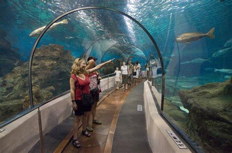 teindre canape cuir aquarium de barcelona attractions barcelone 28 images