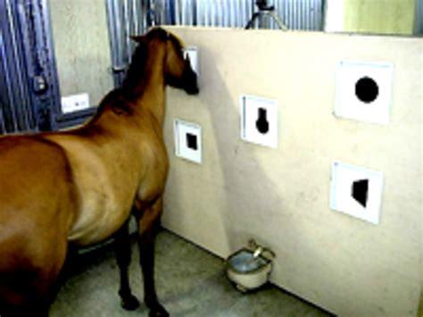 testing equine intelligence horserider