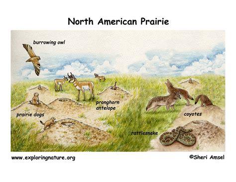 cuisine habitat prairie diagram pig diagram elsavadorla