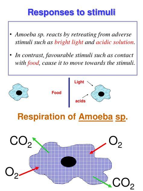 Responses to Stimuli of Amoeba   Tissue (Biology)   Muscle