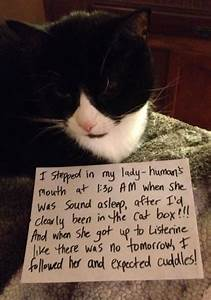 Cat Shaming Funny Pictures Cat Shaming Funny Cats Cats
