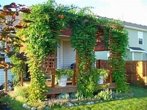 Plantes Grimpantes Pour Pergola  U2013 20 Id U00e9es Romantiques