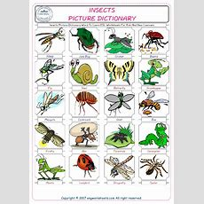 Insects Picture Dictionary Word To Learn Esl Worksheets For Kids And New Learners