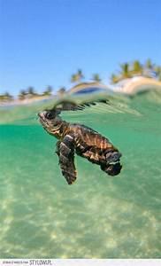 1107 best see diere en visse images on Pinterest   Exotic ...