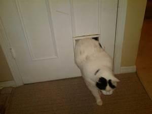 Interior pet door newsonairorg for Interior door with dog door