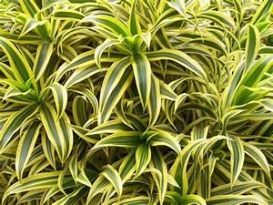 Plantes à Suspendre : plante d polluante 10 plantes d polluantes pour votre ~ Premium-room.com Idées de Décoration