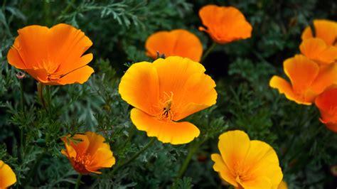 Orange Wallpaper Flower by Orange Flowers Wallpapers Hd Wallpapers Id 5634