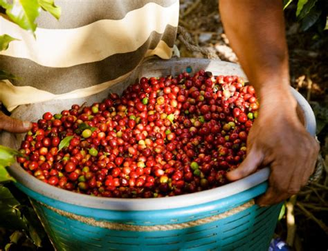 Despite being a relatively small country, costa rica has a variety of distinct coffee growing regions. 5 Reasons Why Costa Rican Coffee Is the Best