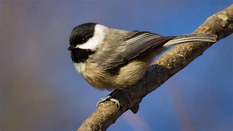 attracting backyard birds   home