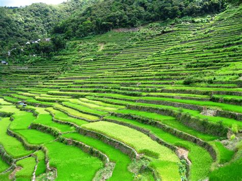 The Viewing Deck Journeying Batad Rice Terraces And