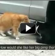 funny cat videos youtu...