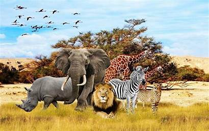 Animals African Safari Animal Wallpapers Tiere Iphone