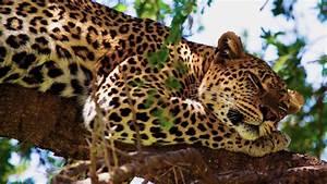 safari wallpaper hd africa - HD Desktop Wallpapers   4k HD