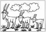 Billy Goat Coloring Pages Goats Colouring Clipart Gruff Colour Three Clip Sheep Template Worksheets Library Printablecolouringpages Larger Credit Getcoloringpages Baby sketch template