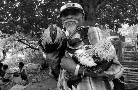 Sou mais conhecido como o rei dos frangos de moscavide cheiro a churrasco que tresando e nem gosto de frango. O rei dos frangos   Cockfighting remains a popular ...