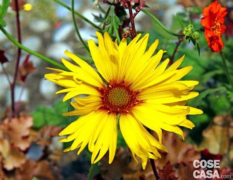 fiori per esterno invernali fiori per esterno invernali piante sempreverdi da balcone