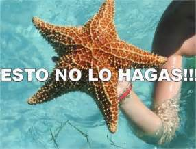 starfish towel image gallery estrellademar