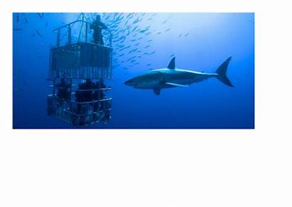 Short Sharks Writing Story Creative Task Resources