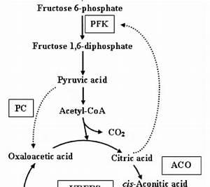 Acid And Base Venn Diagram