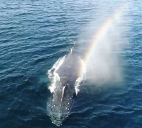 Watch Whale Blow Rainbow From Its Spout Off The