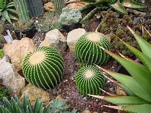 Cultivo decorativo de suculentas