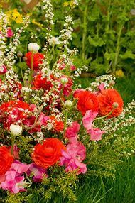 Ranunculus Flowers Garden