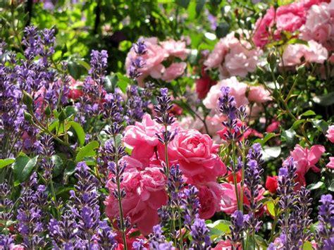 Bilder Mit Lavendel by Und Lavendel Bilder Und Fotos Lavendel