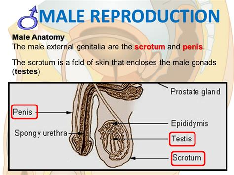 Reproductive System  Ppt Download. Human Resource Degree Salary. University Of Northern Illinois. Cal State Long Beach School Of Nursing. Data Center Physical Security Best Practices. Free Online Banks Accounts Bed And Nreakfast. Intruder Detection Systems Cuttler And Hammer. Online Theological Degree Anthem Institute Nj. Social Worker Certification Online