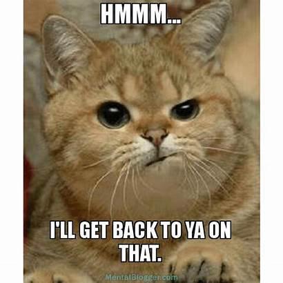 Hmmm Ll Funny Ill Cat Cats Mental