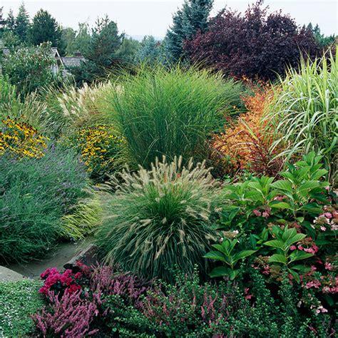grass perennial ornamental grasses for sun and shade on pinterest ornamental grasses grass and perennials