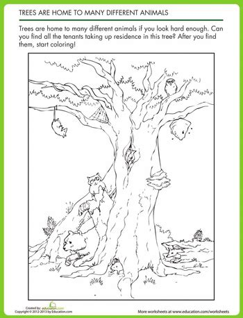 animal homes in trees mfw k nest animal worksheets