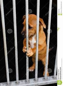 Sad Dog In A Cage Royalty Free Stock Photos - Image: 36823558