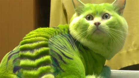 Dragon-cat and bee-dog: Russian groomers turn ordinary