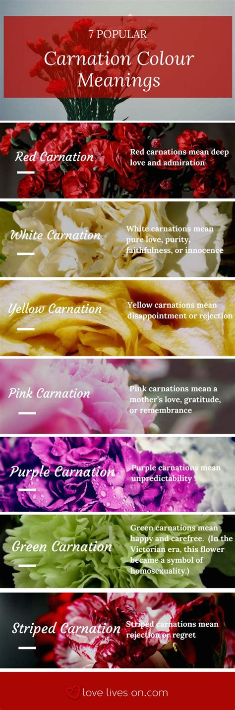 carnation color meanings best 25 carnation ideas on carnation